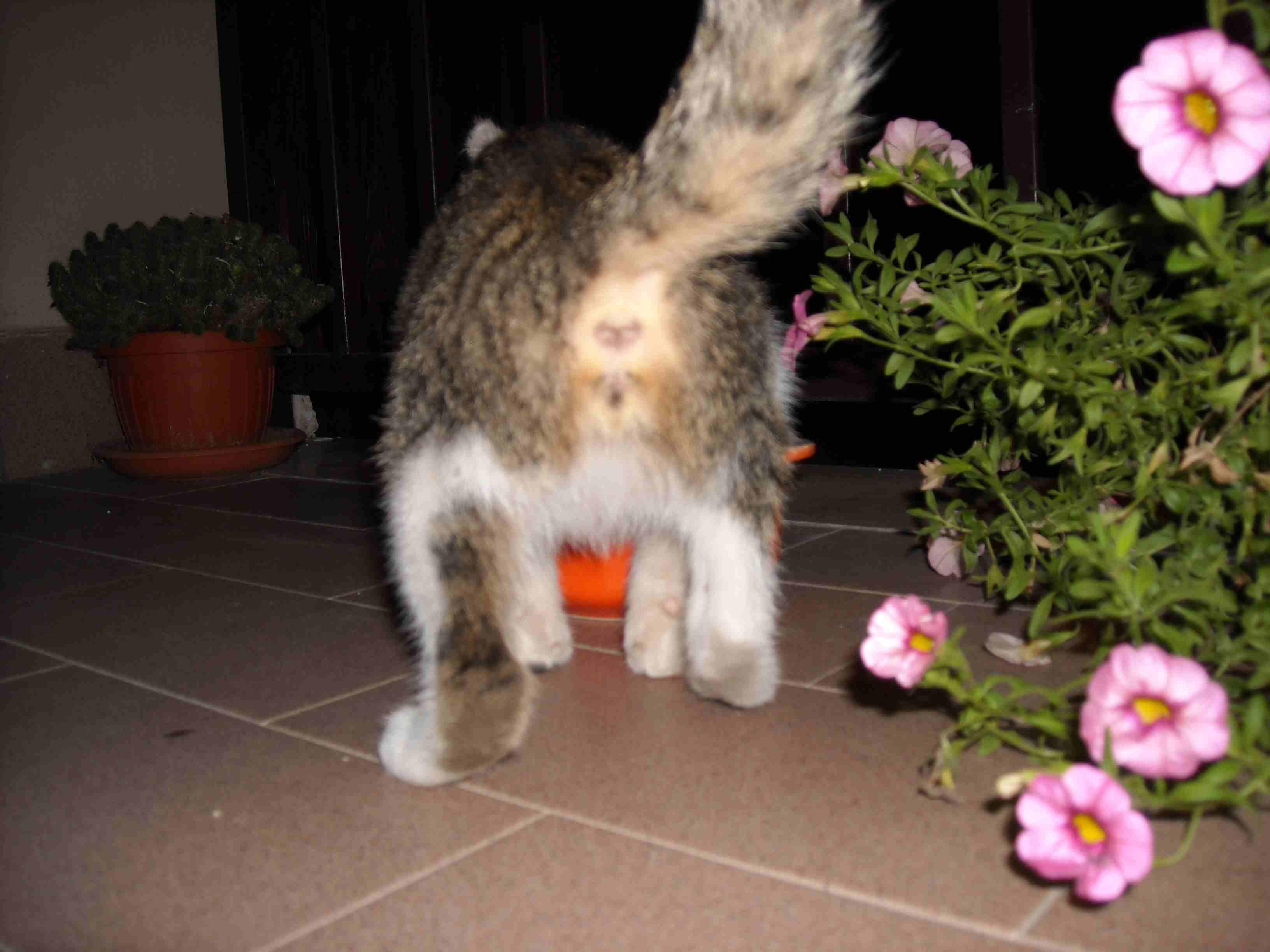 Gattolandia Help Gattino Maschio O Femmina