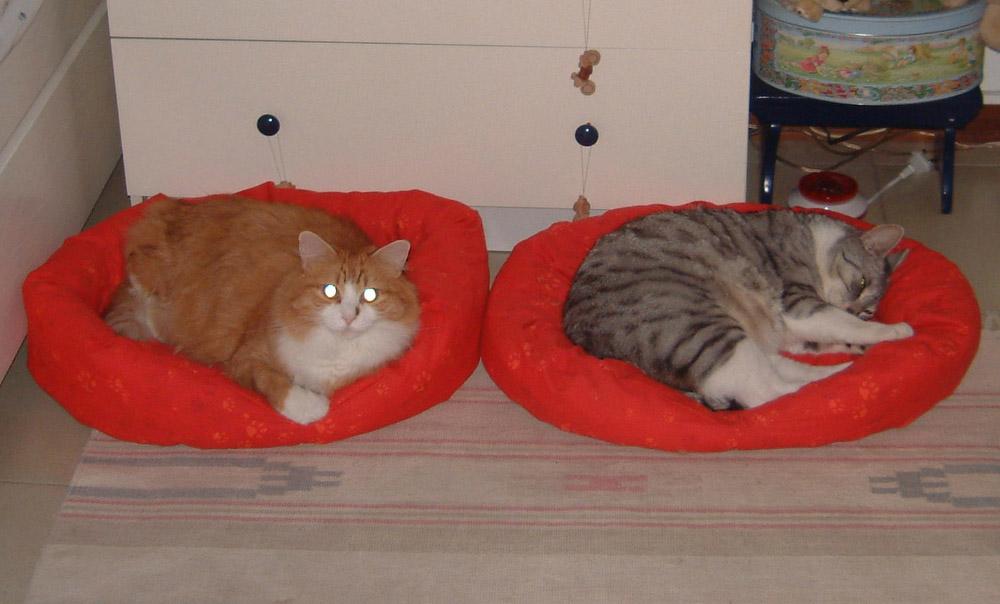 Ikea animali la scelta giusta variata sul design della - Cuccia per gatti ikea ...